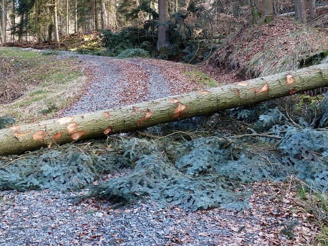 Blockade: Baum auf Waldweg