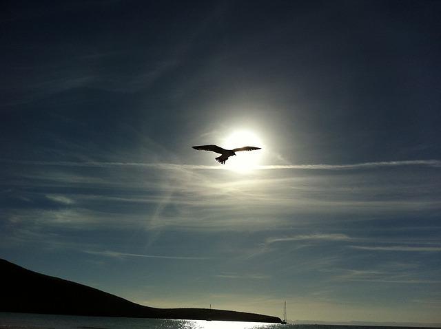 Friedenstaube am Himmel