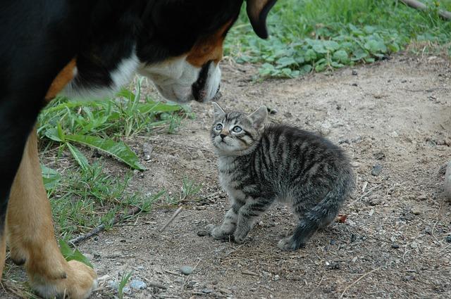 Begegnung Hund und Katze