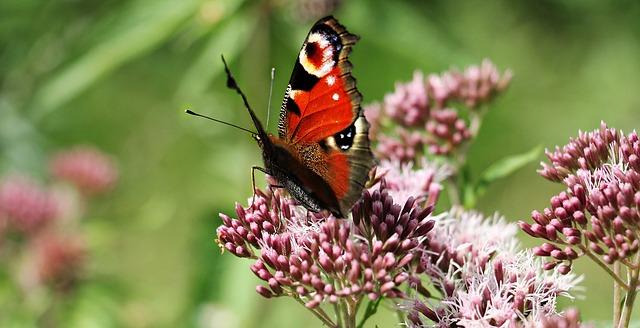 Schmetterling im Jetzt