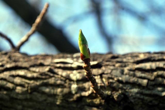 Zweig aus Baum, ich und das letzte Leben